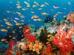 svet oceanov